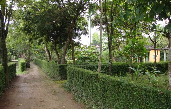 ancient phuoc tich village